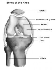 Bones of the knee joint