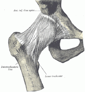 The liofemoral ligament in the hip