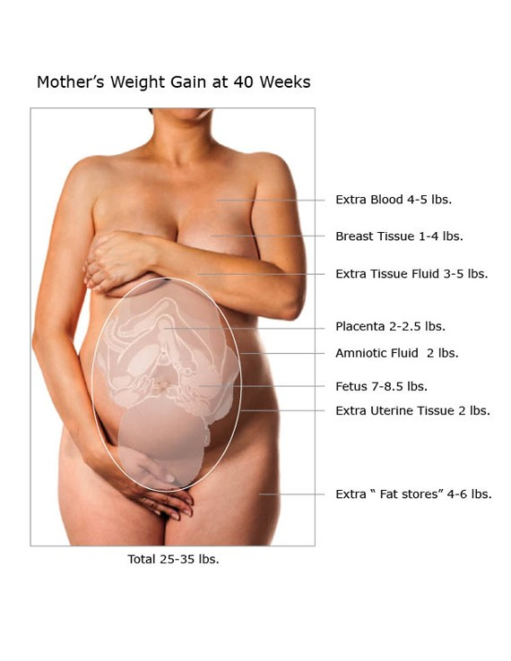 Illustration of weight gain during pregnancy