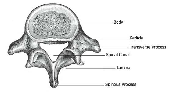 L-5, the 5th lumbar vertebra.