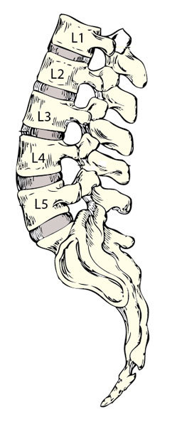 Bones and disks of lumbar spine