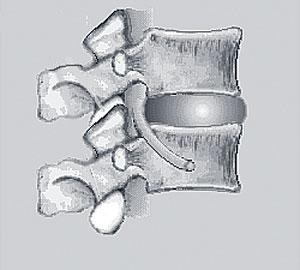 Spinal Segment