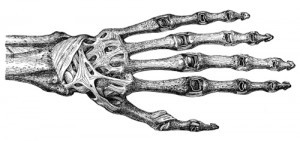 Ligaments of the back of the hand
