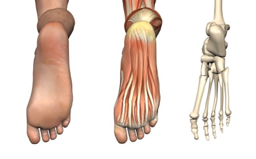Bottom of the foot