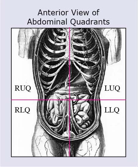 Left Upper Quadrant Anatomy moreover 1482768 further 5377395 as well Lesson 1 also Ask Me Anything. on ruq organs