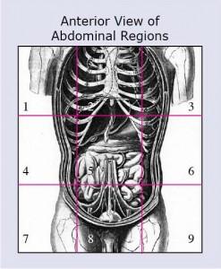 9 Abdominal Regions
