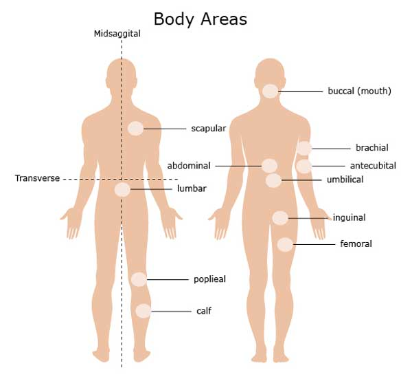 Anatomical Body Areas