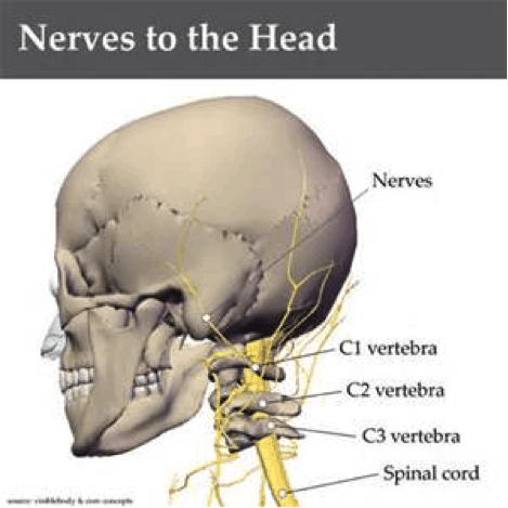 Neck Anatomy Nerves Picture